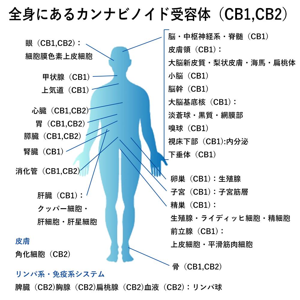 「カンナビノイド受容体」の画像検索結果